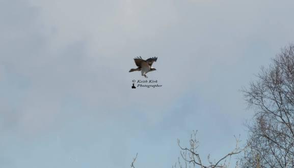 Osprey 03